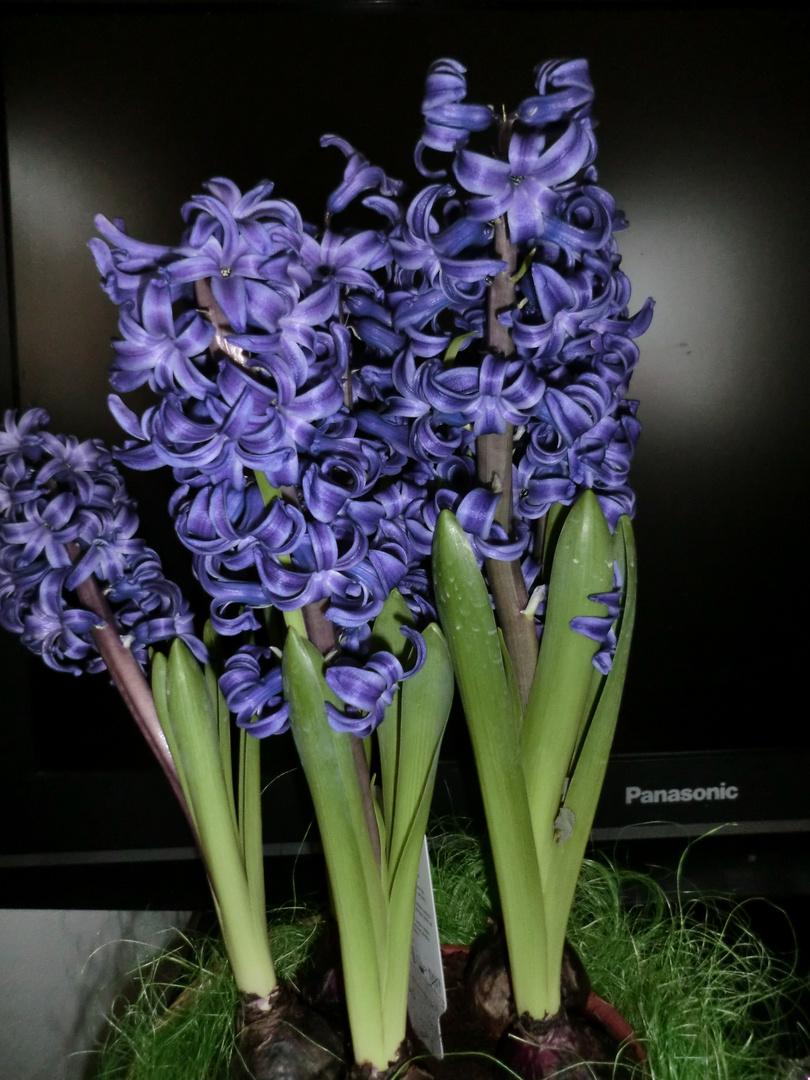 Frühling im Wohnzimmer