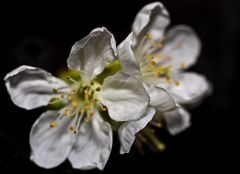 Frühling im Zimmer