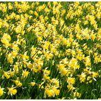 Frühling im Zolli 1