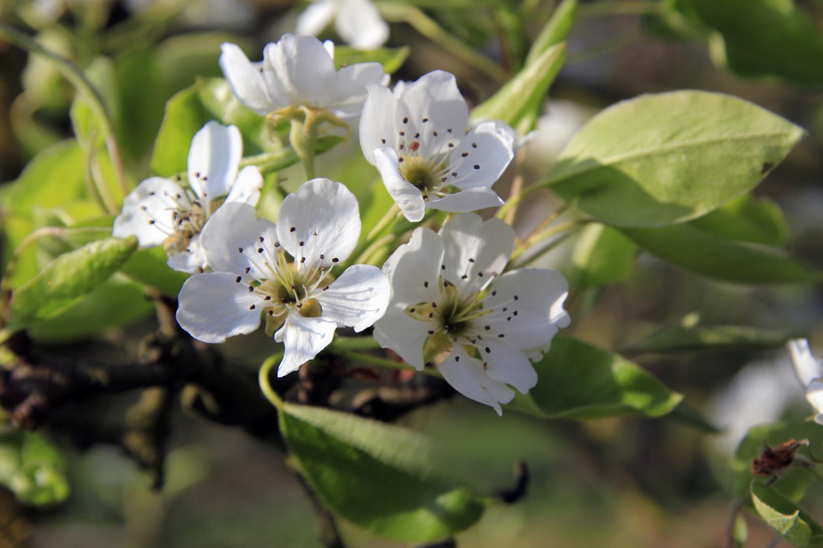 Frühling immer wieder fasination