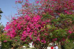Frühling in Äypten