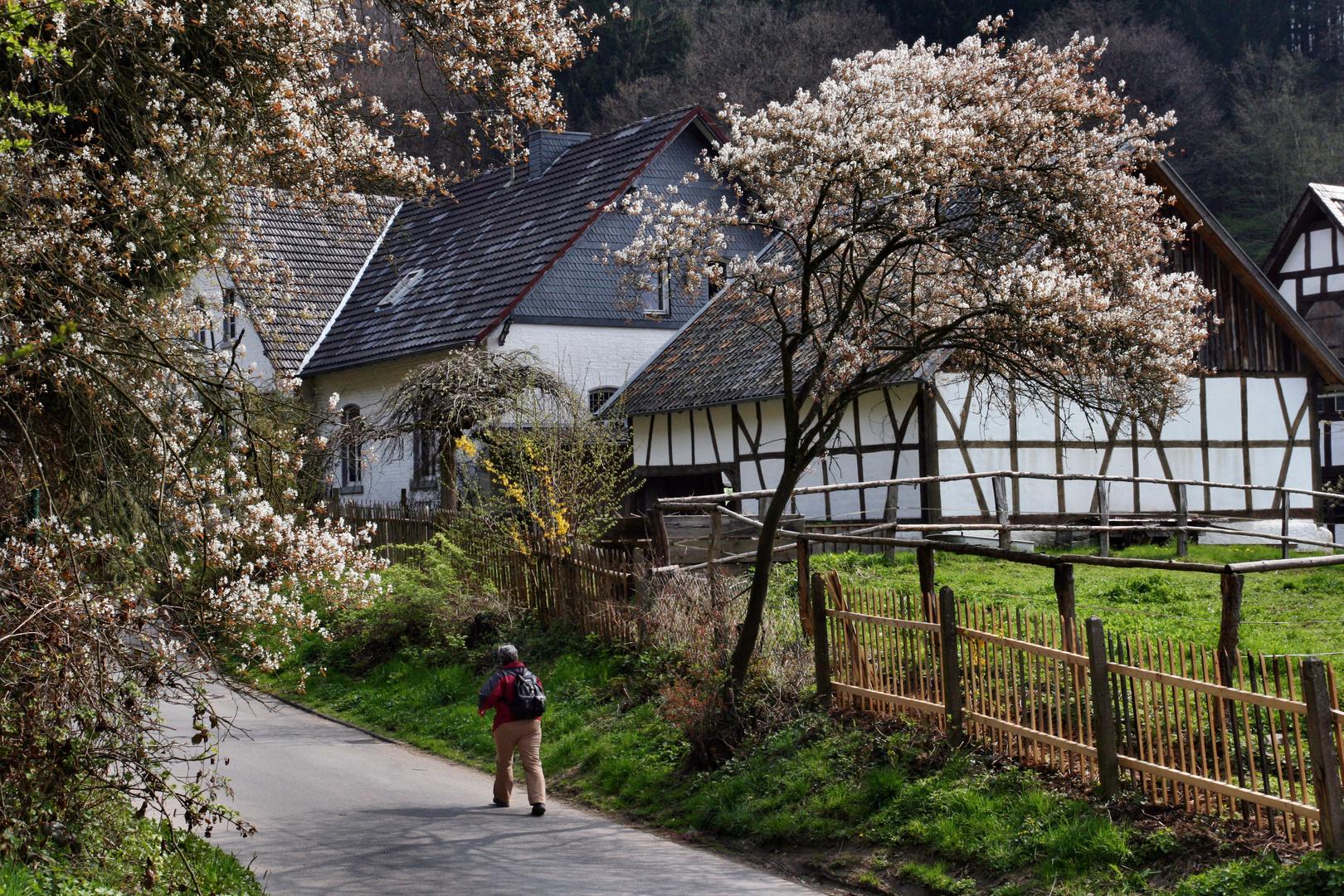 """Frühling in """"Altwindeck"""" an der Sieg"""