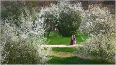 Frühling in Bamberg