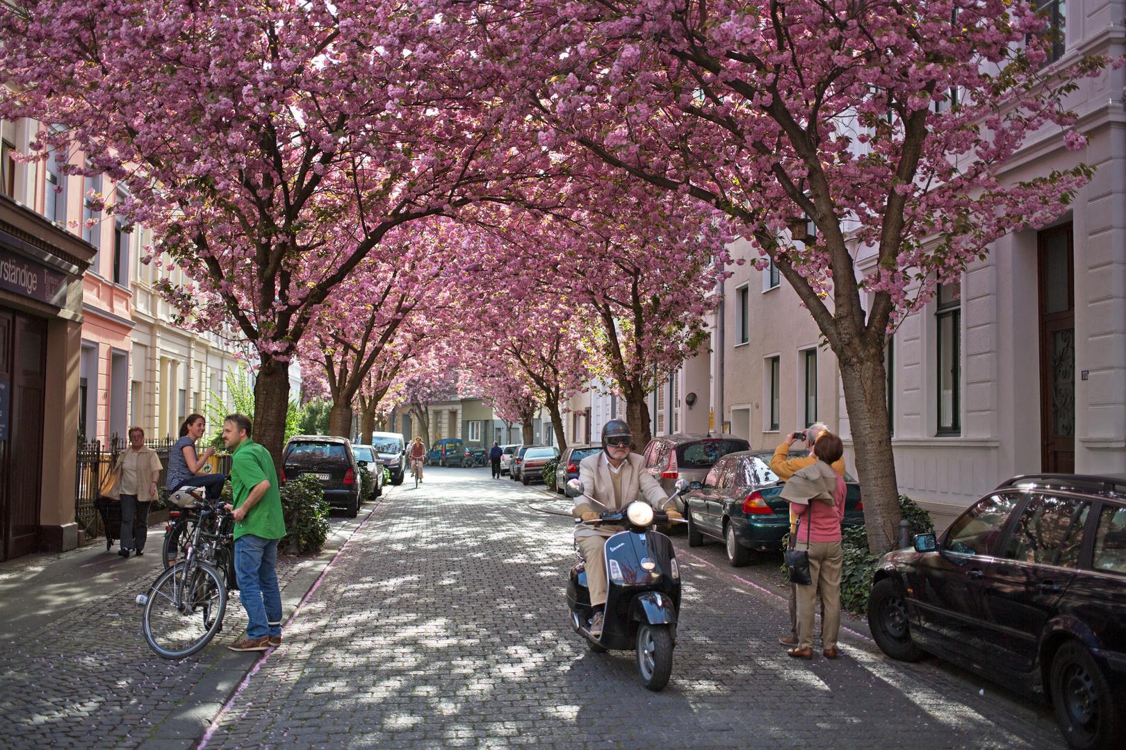 Frühling in Bonn