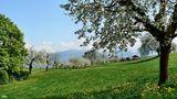 Frühling in den Bäumen von Juan