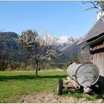 Frühling in den Bergen (3) - 2008