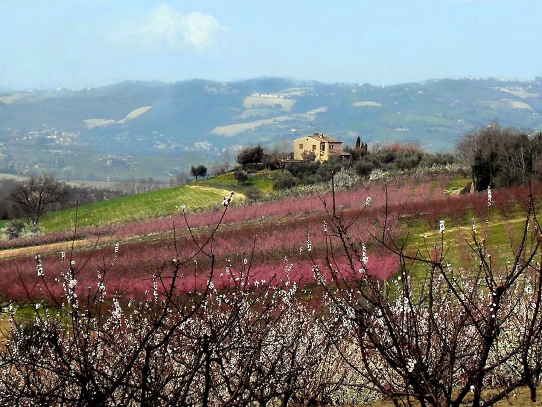 Frühling in den 'Italienischen Marken'