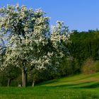 """Frühling, in der Eifel""....."
