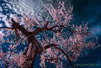 Frühling in der Fantasiewelt