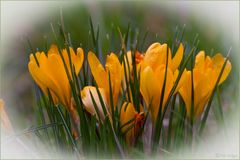 Frühling in der Flora