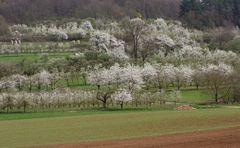 Frühling in der Fränkischen Schweiz