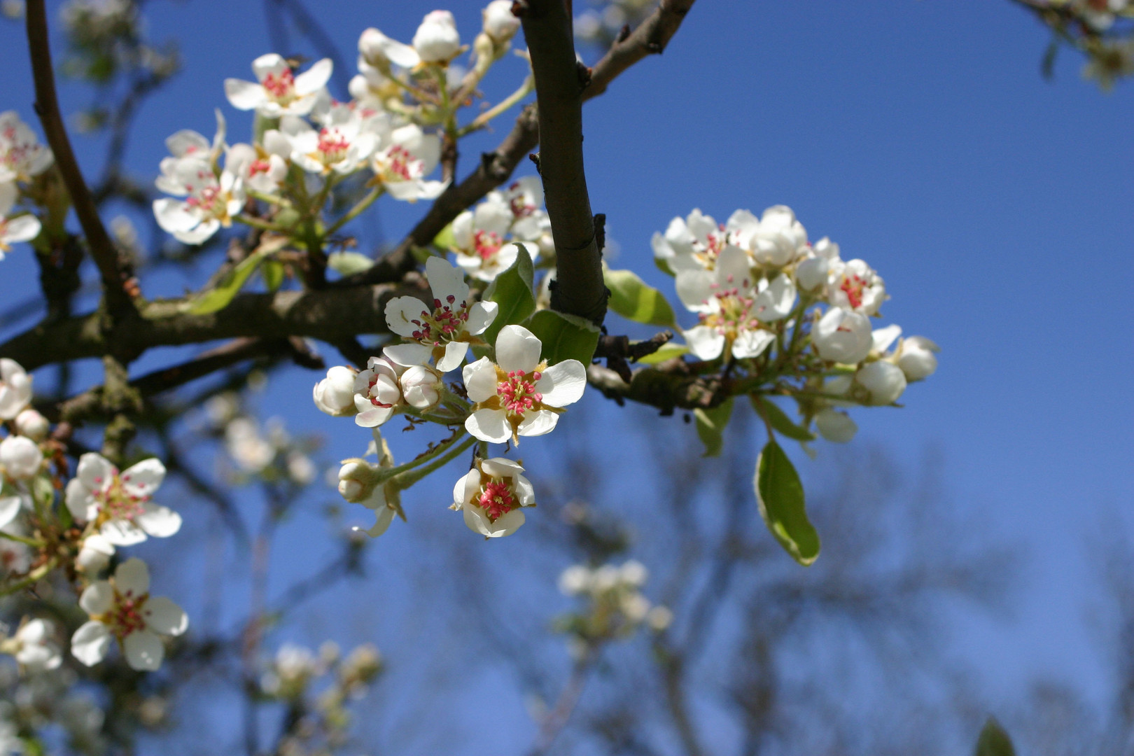 Frühling in der Rheinaue Friemersheim