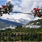 Frühling in der Sierra Nevada, oder...