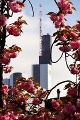 Frühling in der Stadt...