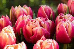 Frühling in der Vase....