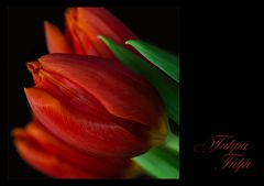 Frühling in der Vase... III.