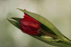 Frühling in der Vase IV...