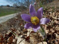 ..Frühling in der Wachau....