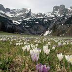 Frühling in der Werfenwenger - Au im Salzburgerland