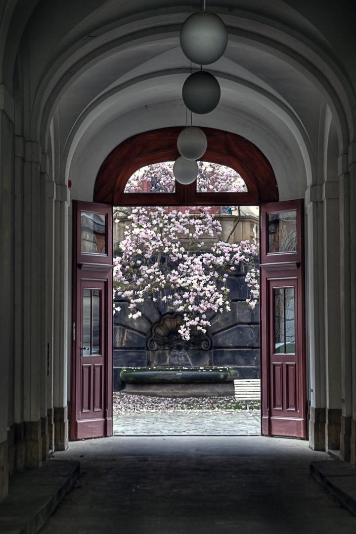 Frühling in Dresden