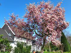 Frühling in Gelsenkirchen, Ortsteil Resse