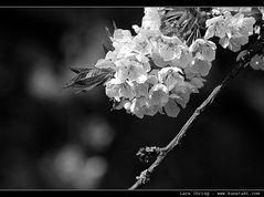 Frühling in Himmigtown