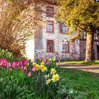 Frühling in Homberg