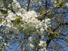Frühling in Käferbach