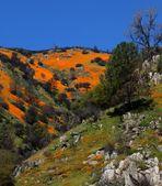 Frühling in Kalifornien