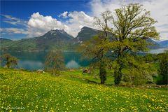Frühling in Krattigen