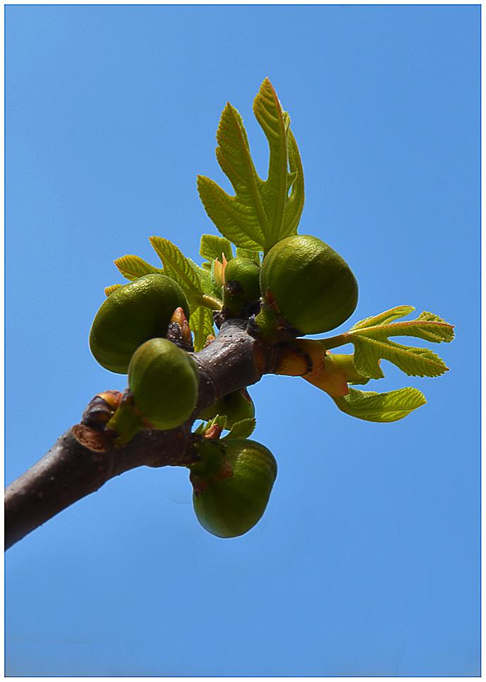 Frühling in Kroatien 2