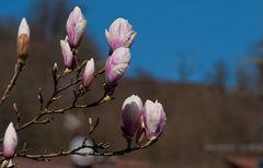 Frühling in meinem Dorf 1