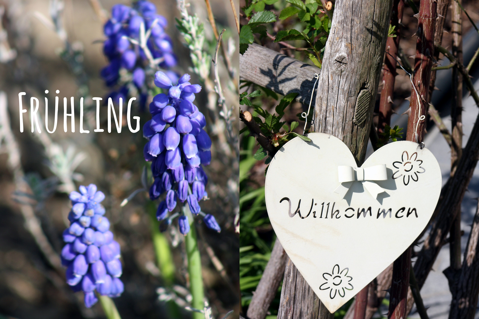 Frühling in meinem Garten 2015