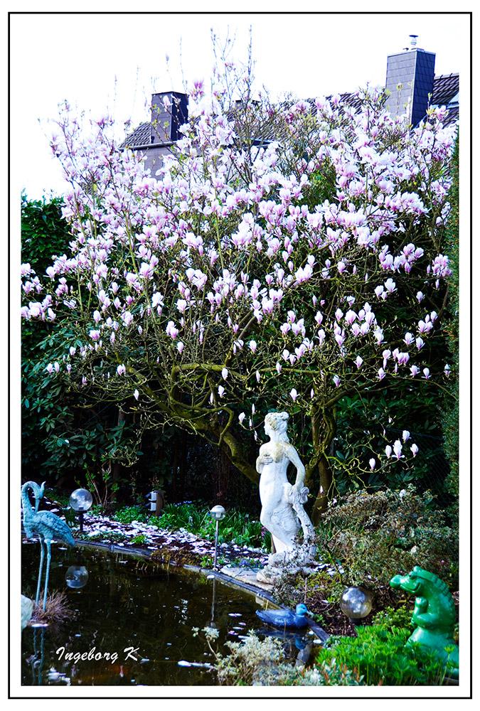 Frühling in meinem Garten