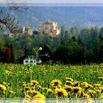 Frühling in meinem Paradies........