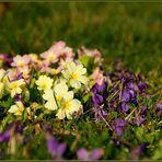 Frühling in Nursch