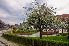 Frühling in Obercunnersdorf