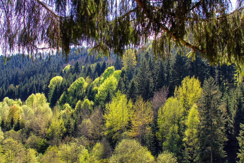 Frühling in Oberösterreich 2