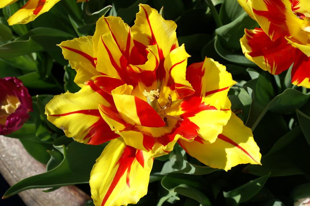 Frühling in Peine
