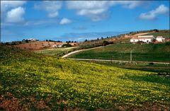 Frühling in Portugal