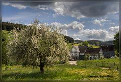 Frühling in Richstein