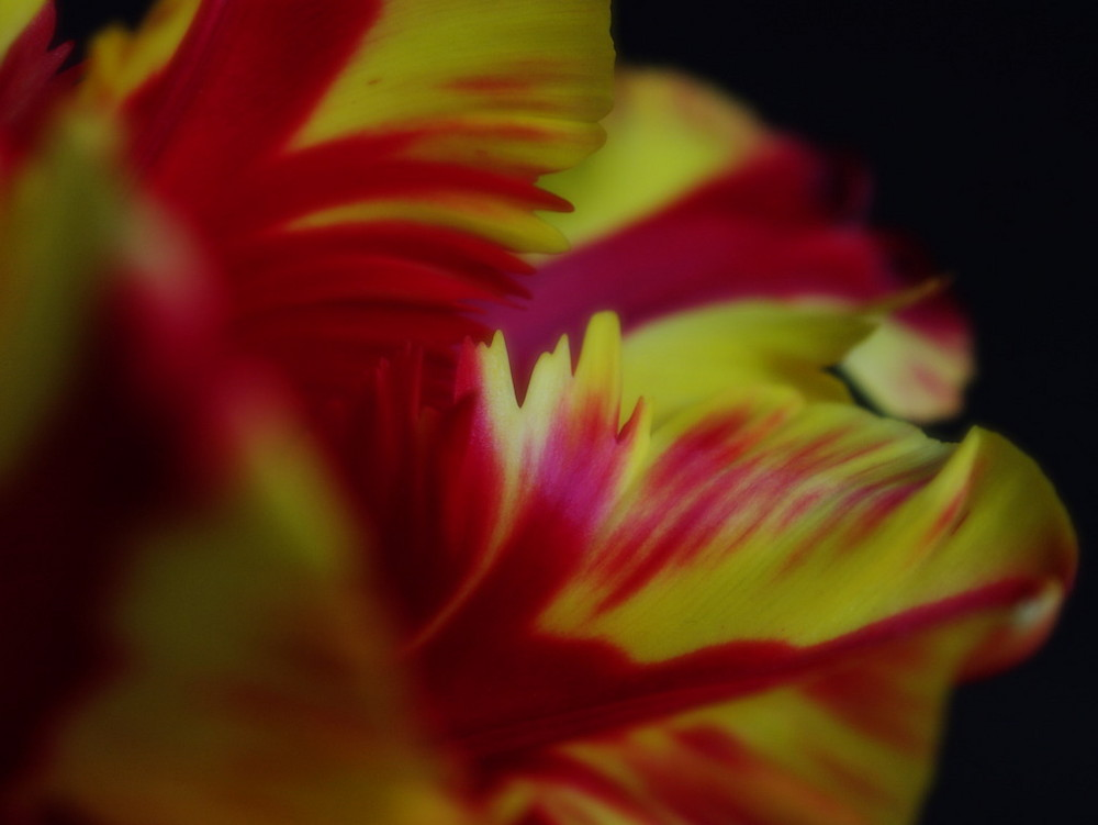 Frühling in Rot un Gelb