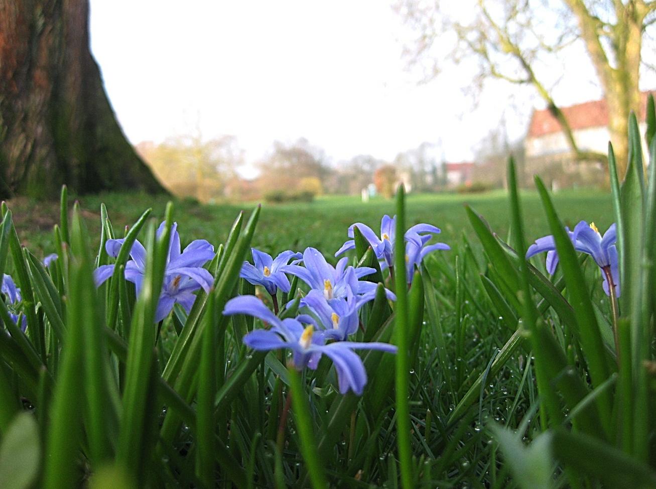 Frühling in Steinfurt