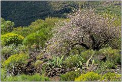 Frühling in Teneriffa