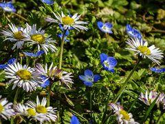 Frühling in unserem Garten-01