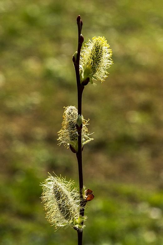 Frühling in unserem Garten-02 - Objetivtest