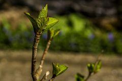 Frühling in unserem Garten-03 - Objetivtest