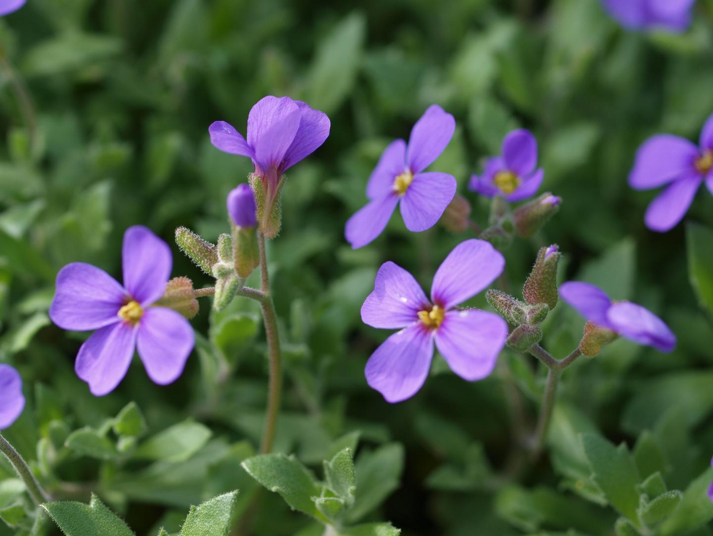 Frühling in unserem Garten 1