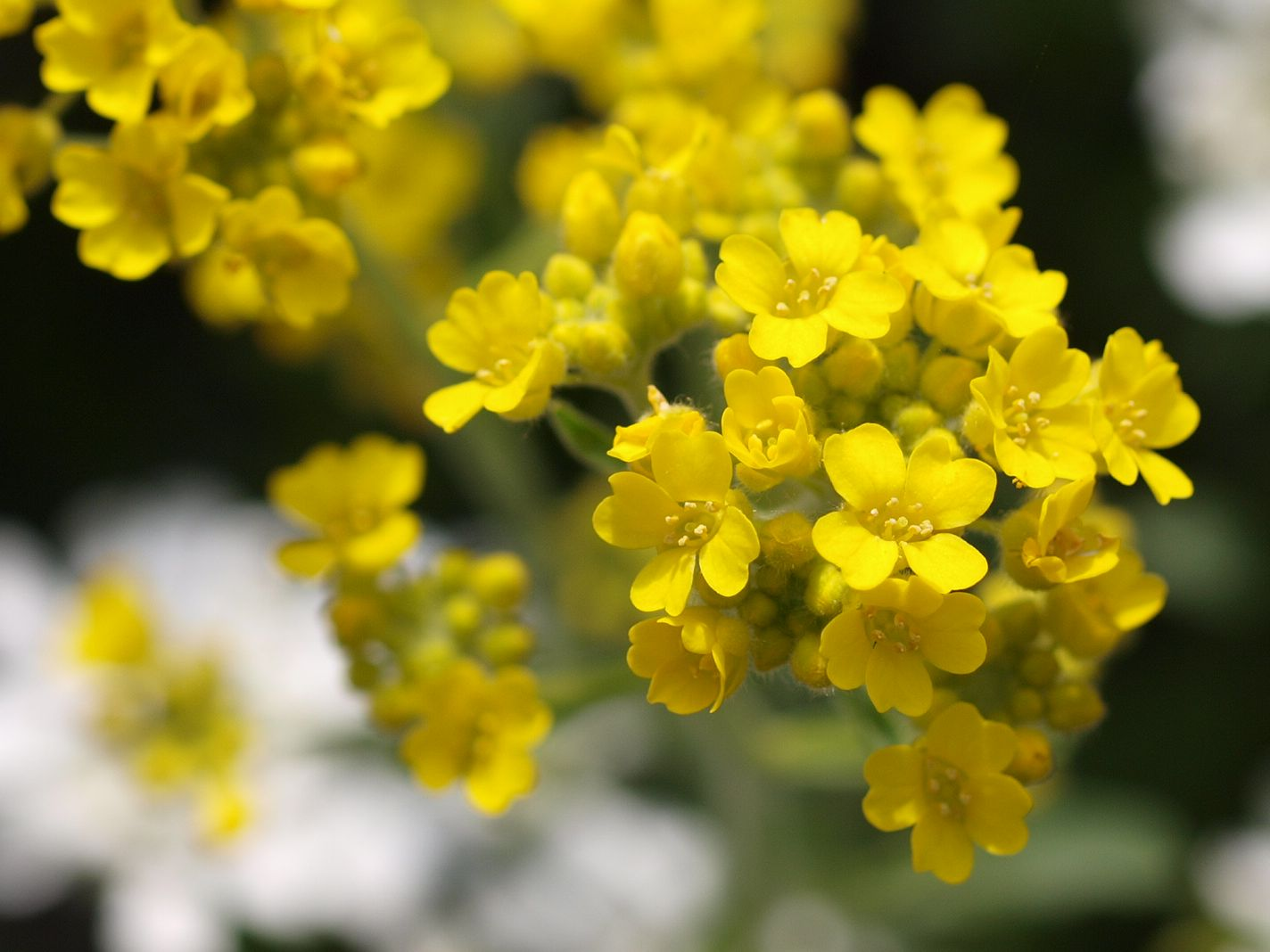 Frühling in unserem Garten 2