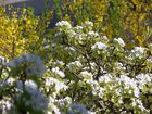 Frühling in Wittgensdorf
